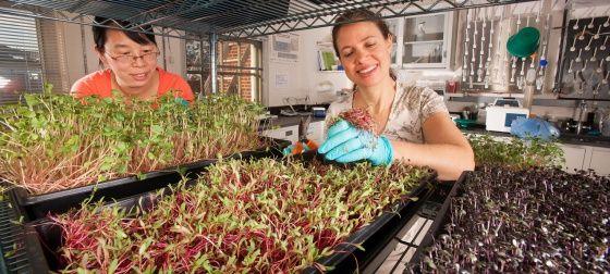 Шкафы для выращивания микрозелени